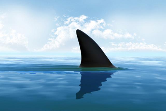 Shark-fin_640